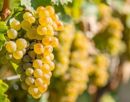 Wein & Wellness in Slowenien