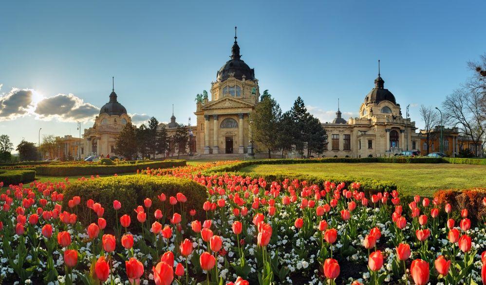 Frühling in Budapest