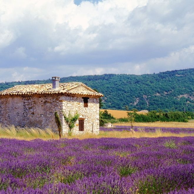 Traumhafte Provence – Camargue